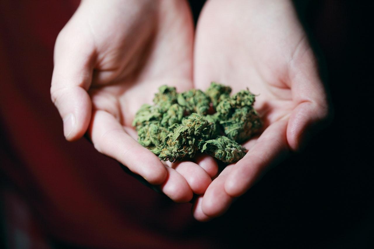 Medicinal Cannabis plant - Carl Esprey